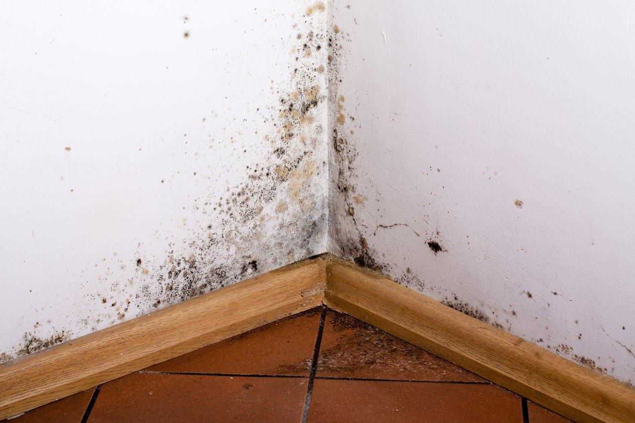 Favorit Feuchte Wände? Wir helfen bei Ursachensuche und Sanierung DC88